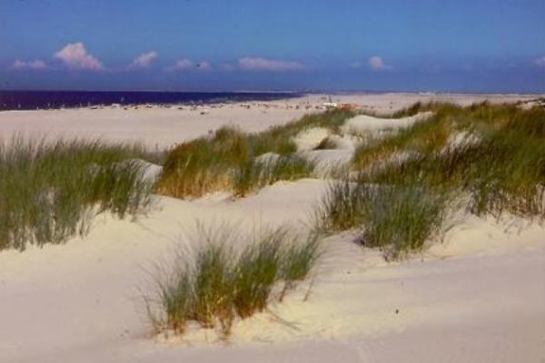 Strand , Jever , Fischbrötchen oder Krabbencocktail
